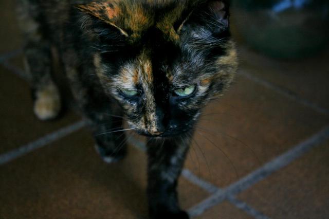 Con la C de Catalina Calico Cat